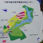 富田芝桜   NO5